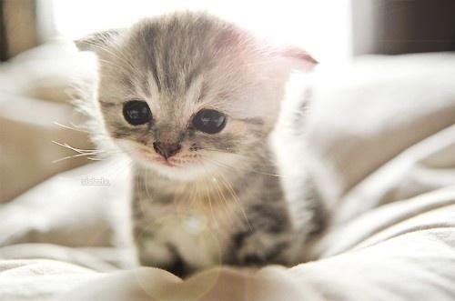 https://totboxblog.files.wordpress.com/2012/07/kitten.jpg
